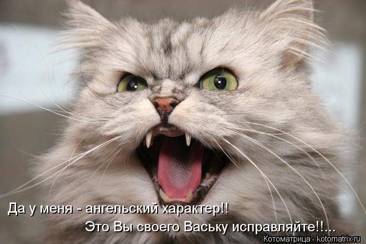 Котоматрица: Да у меня - ангельский характер!! Это Вы своего Ваську исправляйте!!...