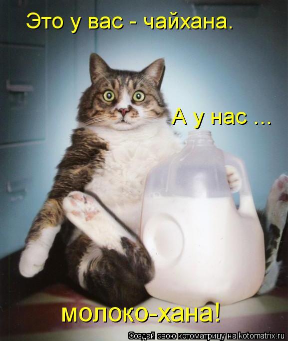 Котоматрица: Это у вас - чайхана. А у нас ... молоко-хана!