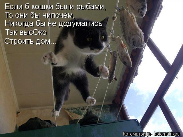 Котоматрица: Если б кошки были рыбами, То они бы нипочём, Никогда бы не додумались Так высОко Строить дом...