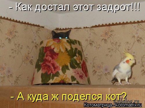 Котоматрица: - Как достал этот задрот!!!  - А куда ж поделся кот?