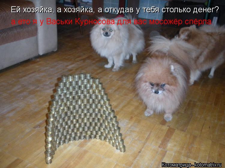 Котоматрица: Ей хозяйка, а хозяйка, а откудав у тебя столько денег? а ето я у Васьки Курносова для вас мосожёр спёрла.
