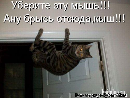 Котоматрица: Уберите эту мышь!!! Ану брысь отсюда,кыш!!!