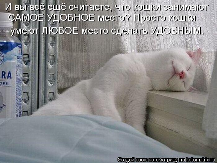 Котоматрица: И вы всё ещё считаете, что кошки занимают  САМОЕ УДОБНОЕ место? Просто кошки умеют ЛЮБОЕ место сделать УДОБНЫМ.