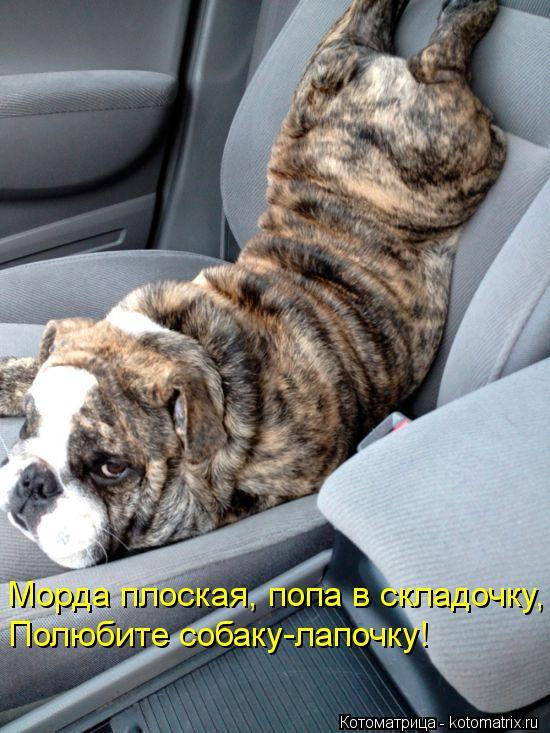 Котоматрица: Морда плоская, попа в складочку, Полюбите собаку-лапочку!