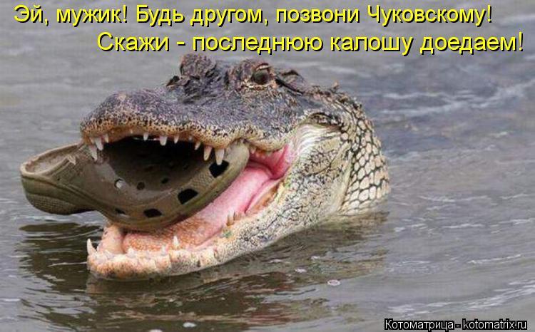 Котоматрица: Эй, мужик! Будь другом, позвони Чуковскому! Скажи - последнюю калошу доедаем!