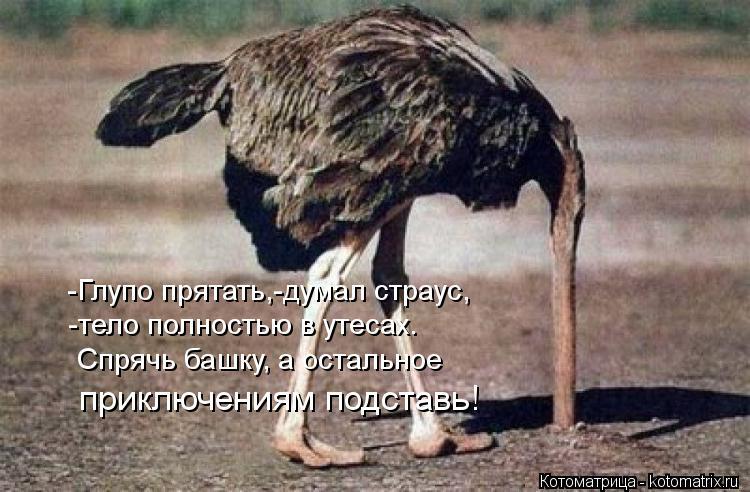 Котоматрица: -Глупо прятать,-думал страус, -тело полностью в утесах. Спрячь башку, а остальное  приключениям подставь!