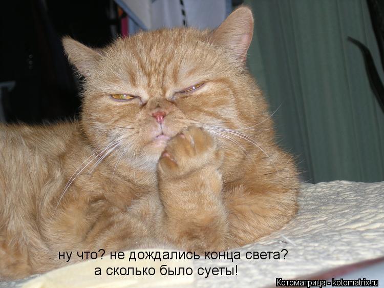 Котоматрица: ну что? не дождались конца света? а сколько было суеты!