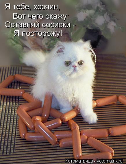 Котоматрица: Я тебе, хозяин, Вот чего скажу: Оставляй сосиски -  Я посторожу!
