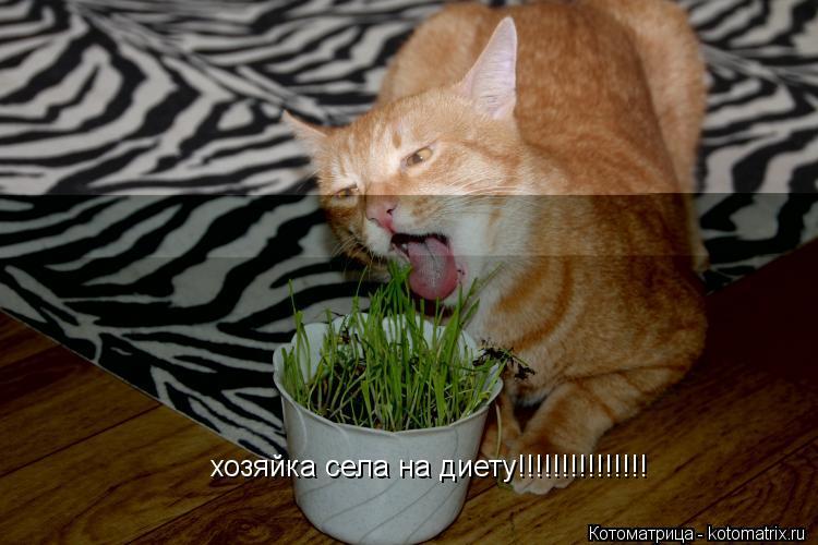 Котоматрица: хозяйка села на диету!!!!!!!!!!!!!!!