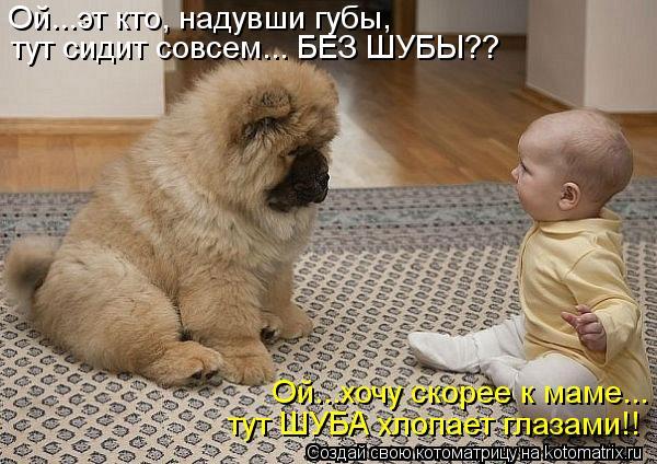 Котоматрица: Ой...эт кто, надувши губы, тут сидит совсем... БЕЗ ШУБЫ?? Ой...хочу скорее к маме... тут ШУБА хлопает глазами!!