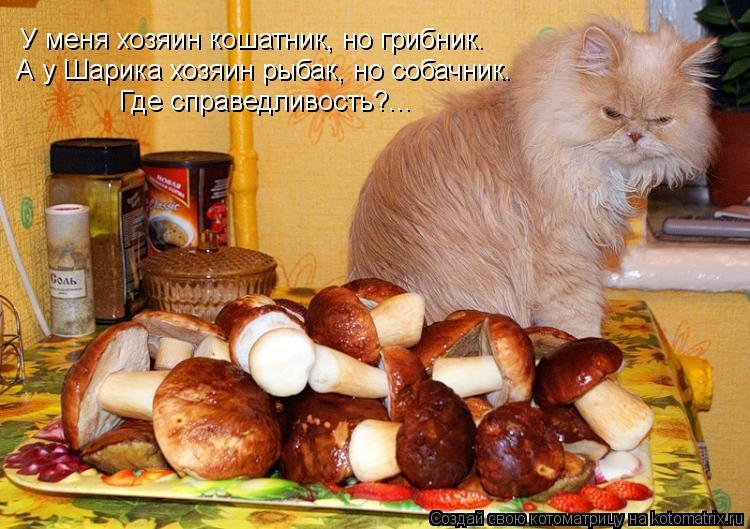 Котоматрица: У меня хозяин кошатник, но грибник.  А у Шарика хозяин рыбак, но собачник.  Где справедливость?...