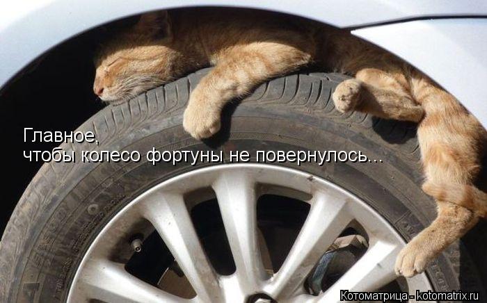 Котоматрица: Главное,  чтобы колесо фортуны не повернулось...