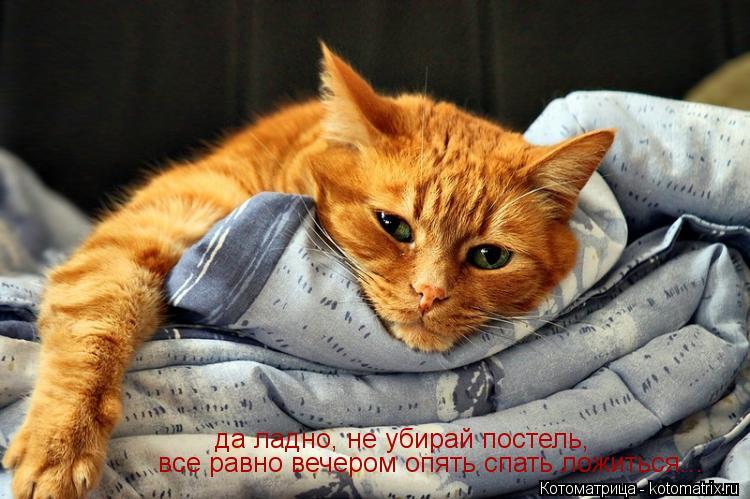 Котоматрица: да ладно, не убирай постель, все равно вечером опять спать ложиться...