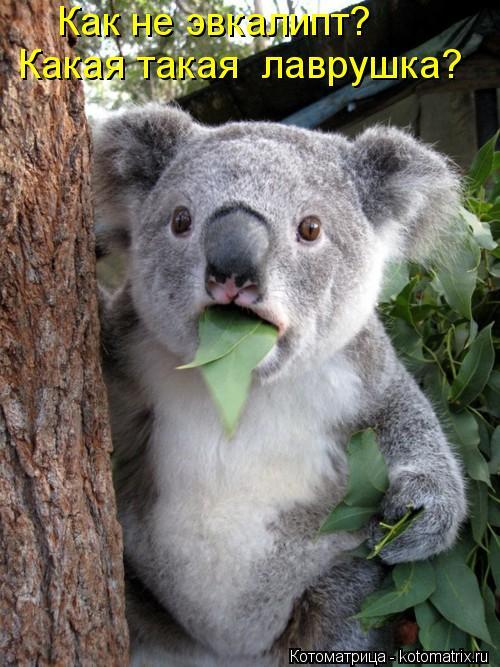 Котоматрица: Как не эвкалипт? Какая такая  лаврушка?