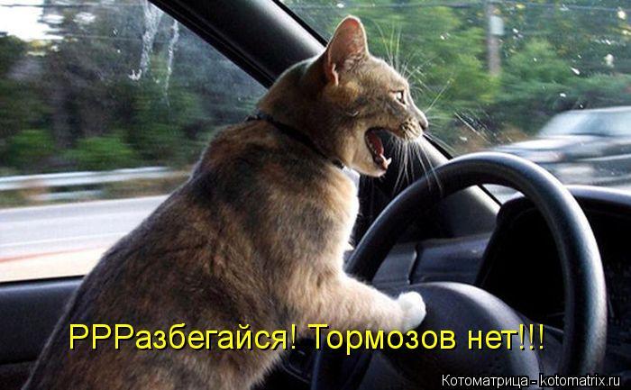 Котоматрица: РРРазбегайся! Тормозов нет!!!
