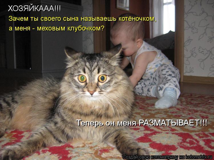 Котоматрица: ХОЗЯЙКААА!!! Зачем ты своего сына называешь котёночком, а меня - меховым клубочком? Теперь он меня РАЗМАТЫВАЕТ!!!
