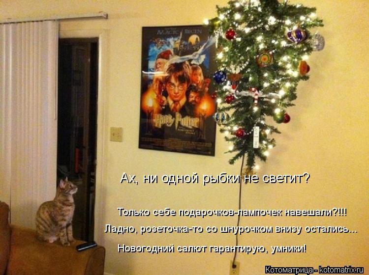 Котоматрица: Ах, ни одной рыбки не светит? Только себе подарочков-лампочек навешали?!!! Ладно, розеточка-то со шнурочком внизу остались... Новогодний салют