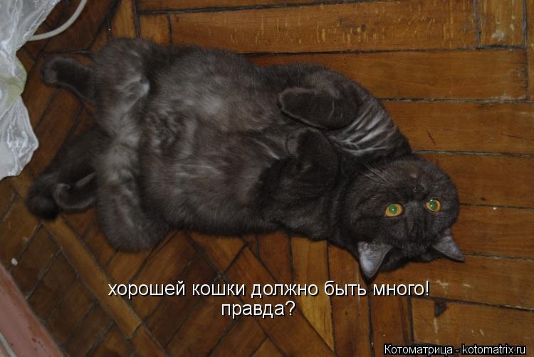 Котоматрица: хорошей кошки должно быть много! правда?