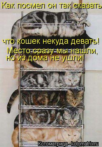 Котоматрица: Как посмел он так сказать, что кошек некуда девать! Место сразу мы нашли, но из дома не ушли!