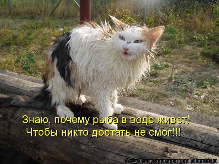 Котоматрица: Знаю, почему рыба в воде живет! Чтобы никто достать не смог!!!
