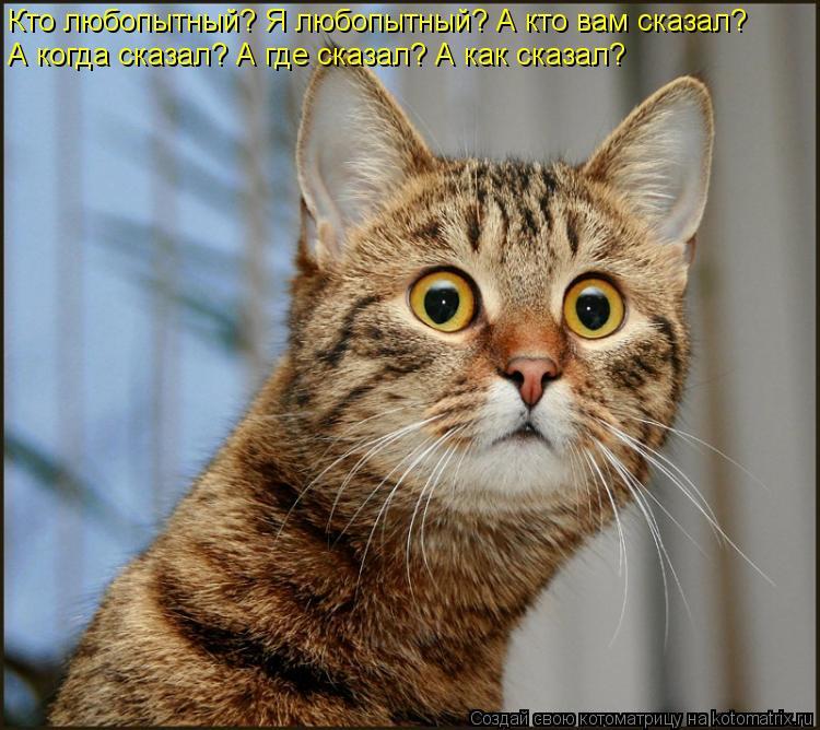 Котоматрица: Кто любопытный? Я любопытный? А кто вам сказал? А когда сказал? А где сказал? А как сказал?