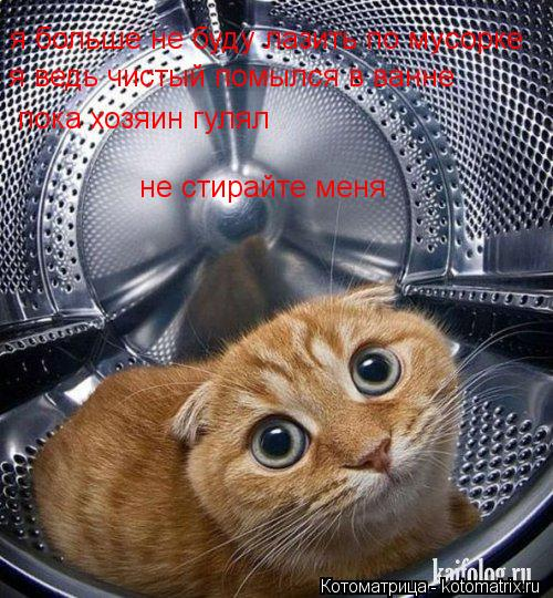 Котоматрица: я больше не буду лазить по мусорке я ведь чистый помылся в ванне  пока хозяин гулял не стирайте меня