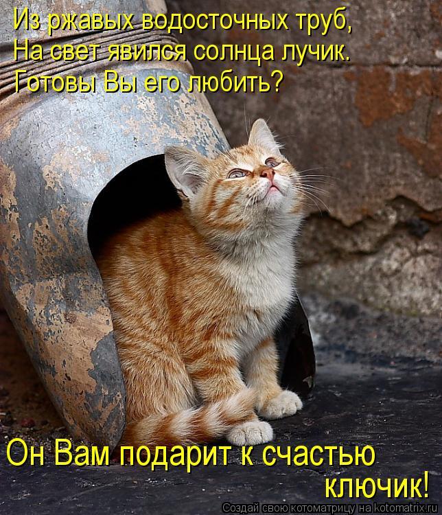 Котоматрица: Из ржавых водосточных труб, На свет явился солнца лучик. Готовы Вы его любить? Он Вам подарит к счастью  ключик!