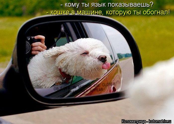 Котоматрица: - кошке в машине, которую ты обогнал! - кому ты язык показываешь?