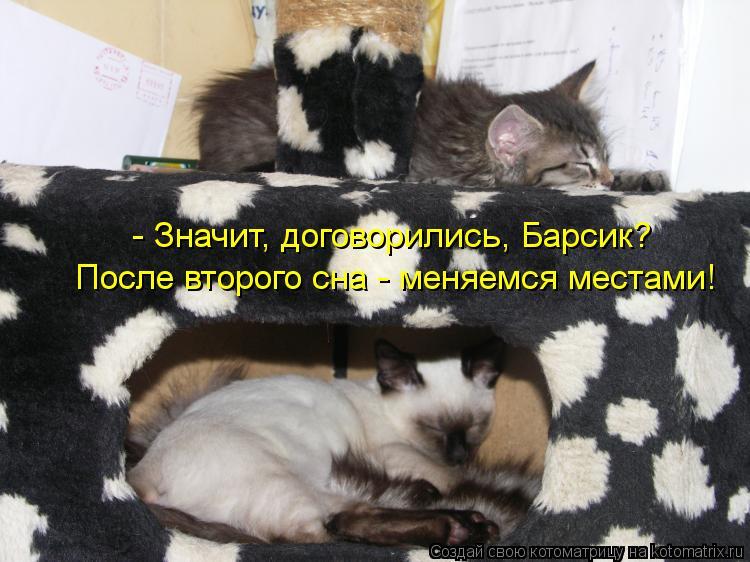 Котоматрица: - Значит, договорились, Барсик? После второго сна - меняемся местами!