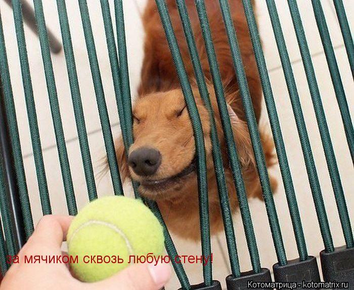 Котоматрица: за мячиком сквозь любую стену!