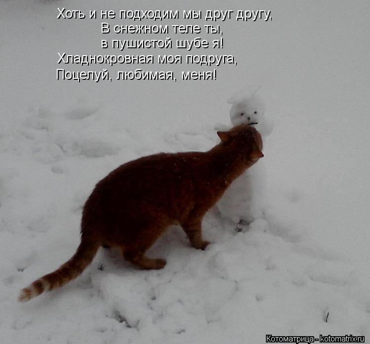 Котоматрица: Хоть и не подходим мы друг другу, В снежном теле ты, в пушистой шубе я! Хладнокровная моя подруга, Поцелуй, любимая, меня!