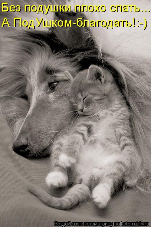 Котоматрица: Без подушки плохо спать... А ПодУшком-благодать!:-)