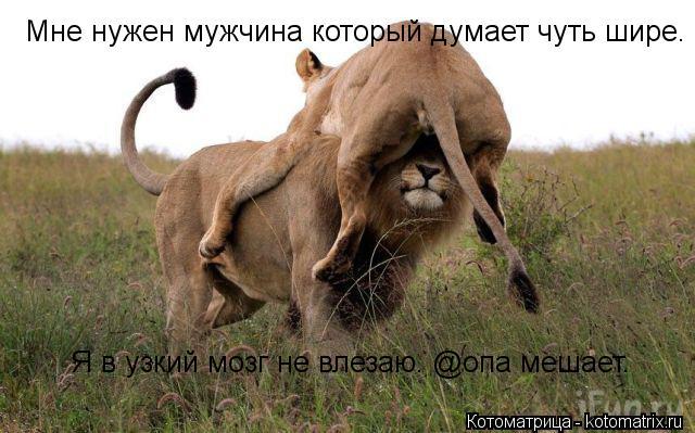 http://kotomatrix.ru/images/lolz/2012/12/27/kotomatritsa_de.jpg