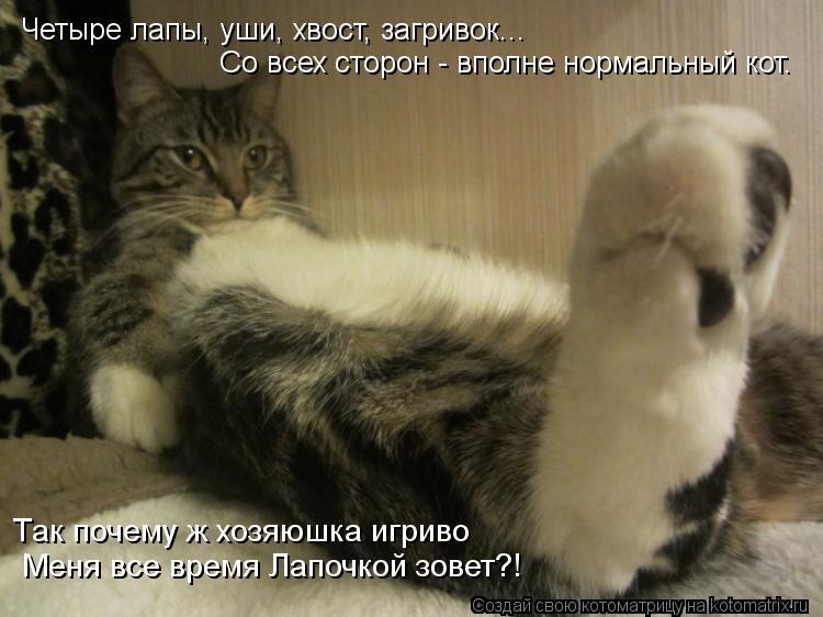 Котоматрица: Четыре лапы, уши, хвост, загривок... Со всех сторон - вполне нормальный кот. Так почему ж хозяюшка игриво  Меня все время Лапочкой зовет?!