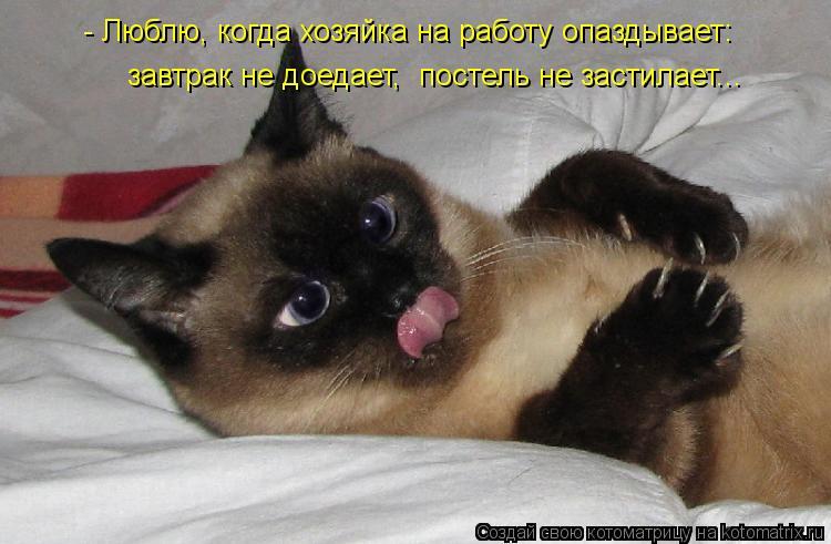 Котоматрица: - Люблю, когда хозяйка на работу опаздывает:  завтрак не доедает,  постель не застилает...
