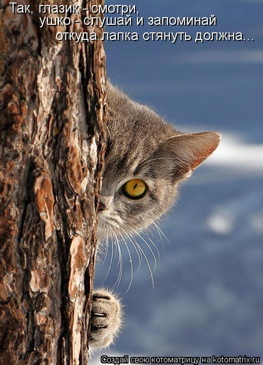 Котоматрица: Так, глазик - смотри,  ушко - слушай и запоминай откуда лапка стянуть должна...