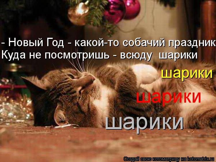 http://kotomatrix.ru/images/lolz/2012/12/28/kotomatritsa_-h.jpg