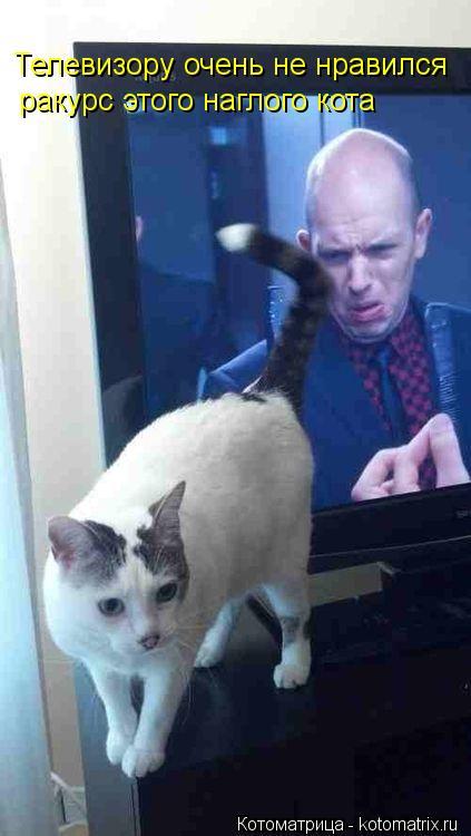 Котоматрица: Телевизору очень не нравился ракурс этого наглого кота