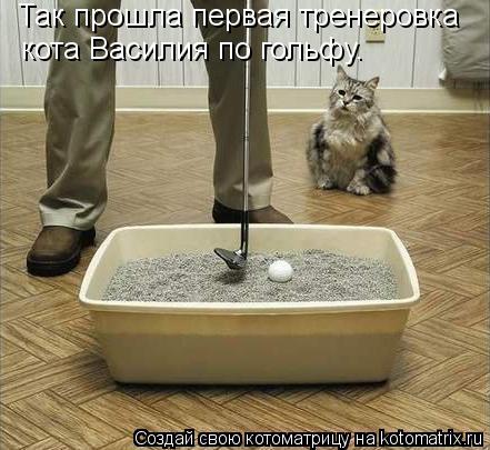 Котоматрица: Так прошла первая тренеровка кота Василия по гольфу.