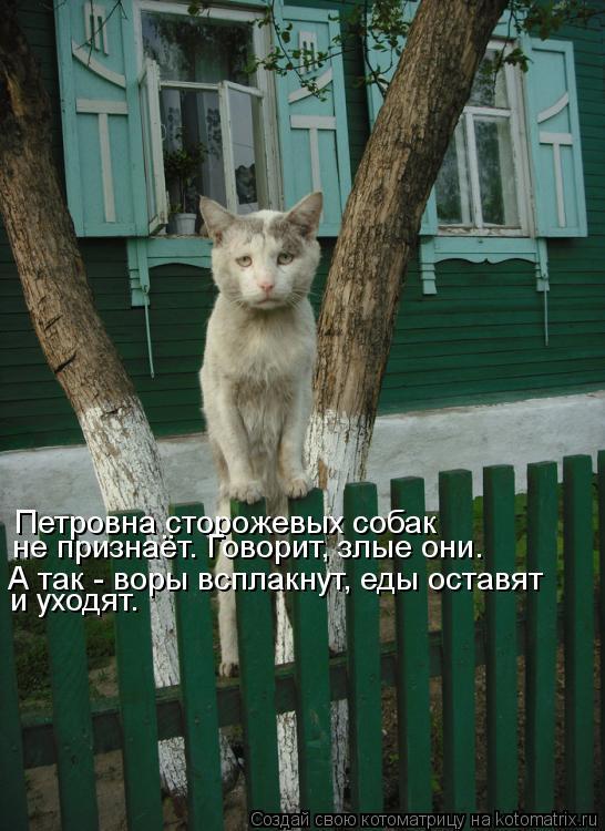 Котоматрица: Петровна сторожевых собак не признаёт. Говорит, злые они. А так - воры всплакнут, еды оставят и уходят.