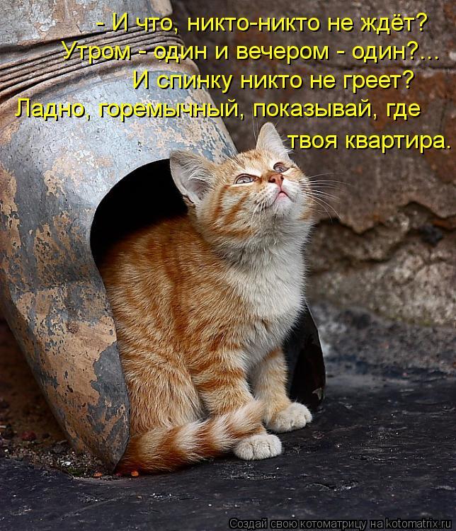 Котоматрица: - И что, никто-никто не ждёт? Утром - один и вечером - один?... И спинку никто не греет? Ладно, горемычный, показывай, где твоя квартира.
