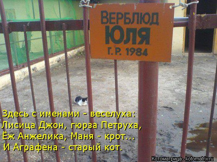 Котоматрица: Здесь с именами - веселуха: Лисица Джон, гюрза Петруха, Ёж Анжелика, Маня - крот... И Аграфена - старый кот.