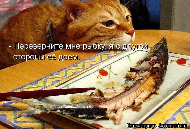 Котоматрица: - Переверните мне рыбку, я с другой  стороны её доем.