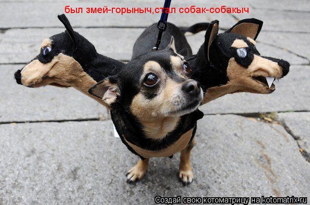 Котоматрица: был змей-горыныч,стал собак-собакыч
