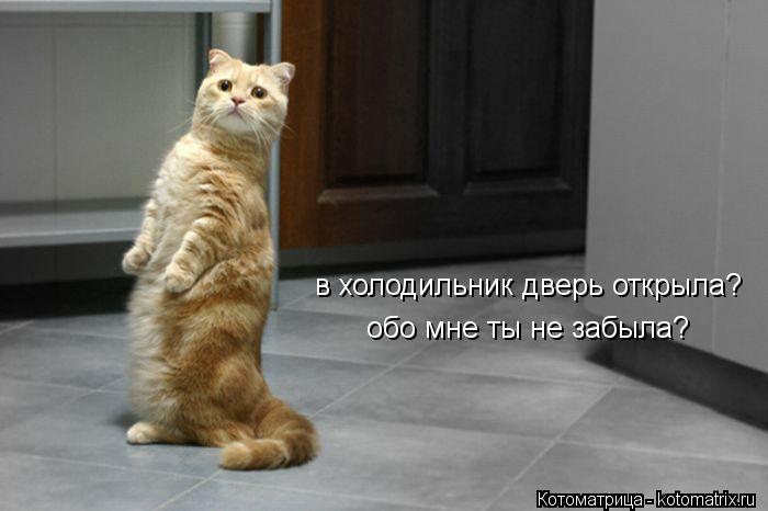 Котоматрица: в холодильник дверь открыла? обо мне ты не забыла?