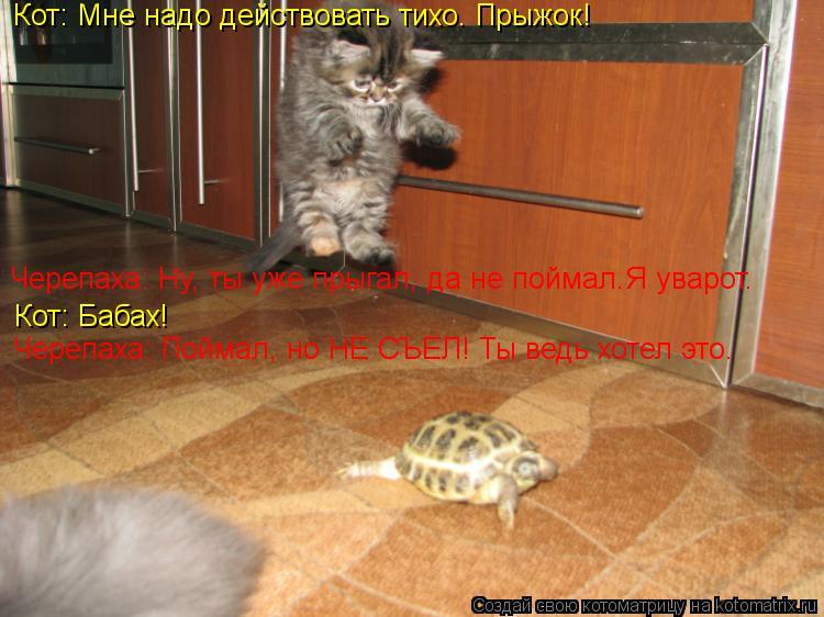 Котоматрица: Кот: Мне надо действовать тихо. Прыжок! Черепаха: Ну, ты уже прыгал, да не поймал.Я уварот. Кот: Бабах! Черепаха: Поймал, но НЕ СЪЕЛ! Ты ведь хоте