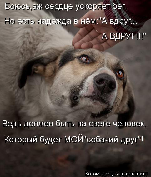 """Котоматрица: Ведь должен быть на свете человек, Который будет МОЙ""""собачий друг""""! Боюсь,аж сердце ускоряет бег, Но есть надежда в нём:""""А вдруг... А ВДРУГ!!!"""""""