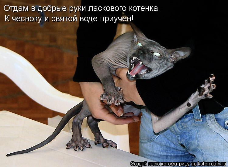 Котоматрица: Отдам в добрые руки ласкового котенка.  К чесноку и святой воде приучен!