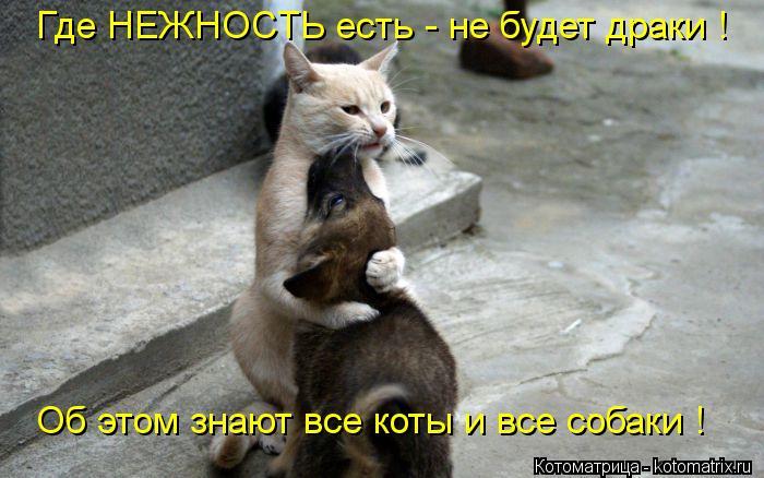 Котоматрица: Где НЕЖНОСТЬ есть - не будет драки ! Об этом знают все коты и все собаки !
