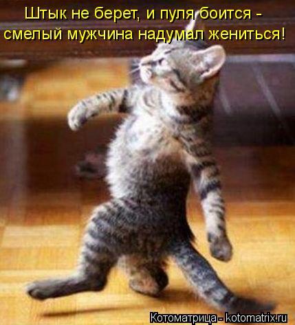 Котоматрица: Штык не берет, и пуля боится -  смелый мужчина надумал жениться!